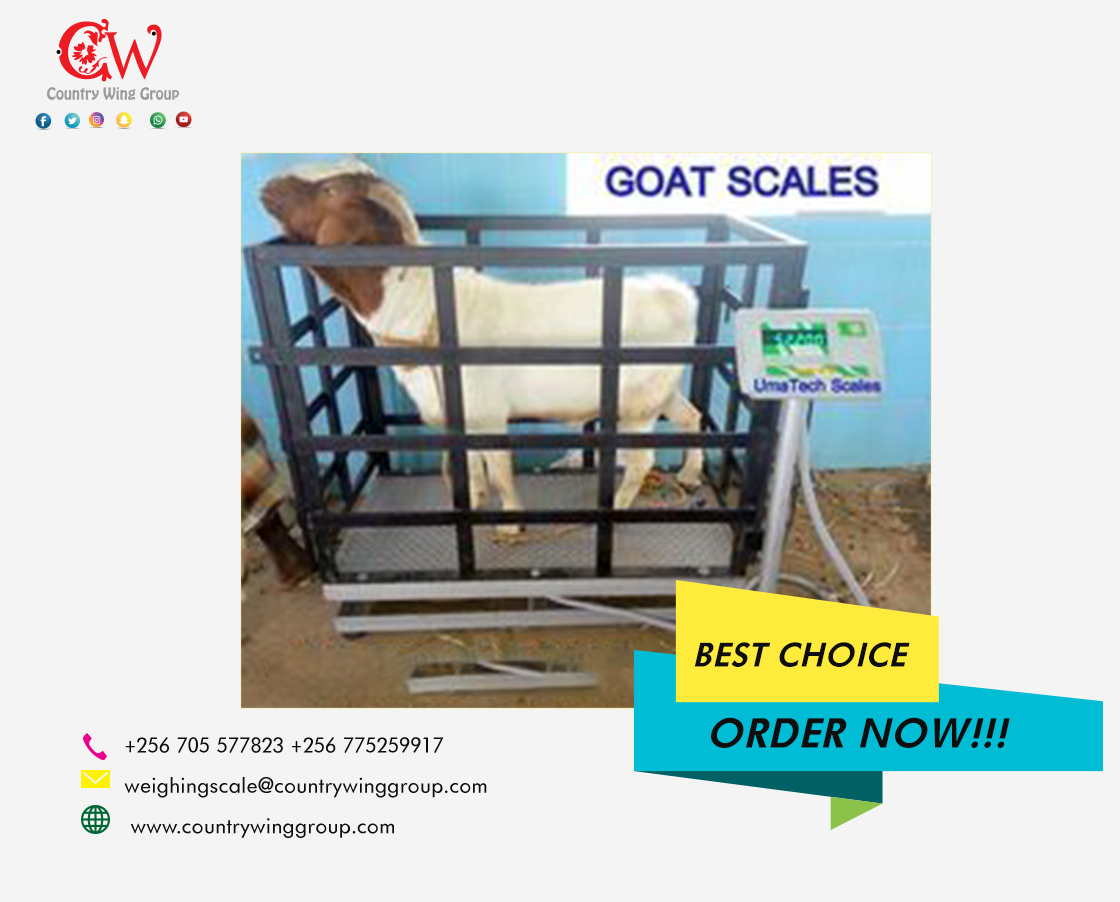 Goat Scale