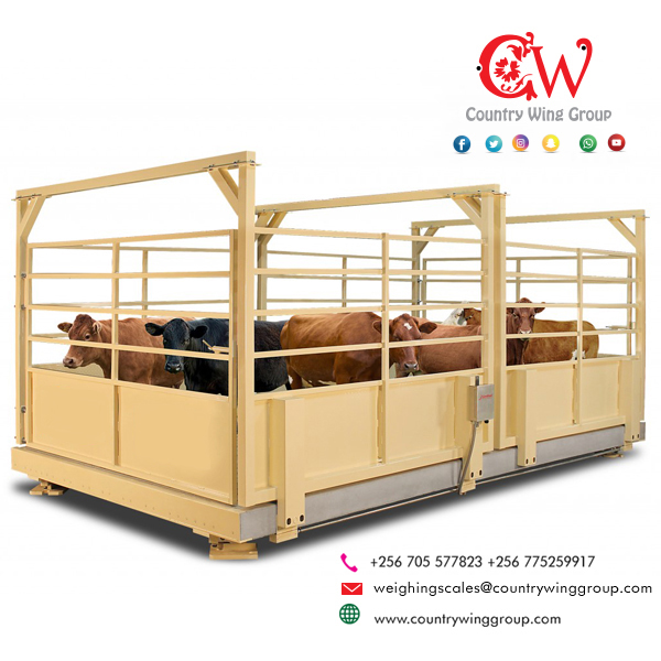 Animal Weighing Scales