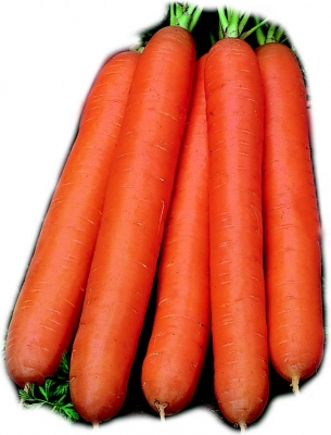 Nantes Coreless Carrot Seeds (10gm)