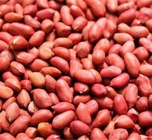 Red Beauty (Serenut 4) ground nuts seeds - 1Kg